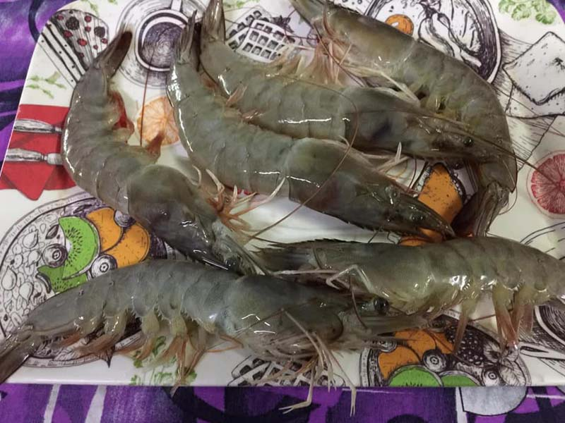 Vaishnavi-Aquatech-Shrimp
